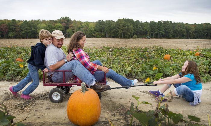 Angie Price (2nd R) and her husband Steve (2nd L) are pulled and pushed by their daughters through a pumpkin patch at Councell Farms in Cordova, Md., on Oct. 19, 2013. (Jim Watson/AFP/Getty Images)