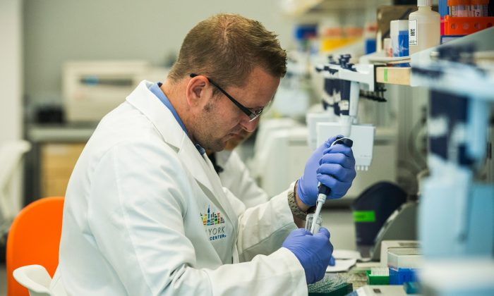 Research technicians prepare DNA samples to be sequenced in the production lab of the New York Genome Center in New York City, on Sept. 19, 2013. (Andrew Burton/Getty Images)