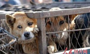 Dogs and Cats Skinned Alive for Their Fur in China