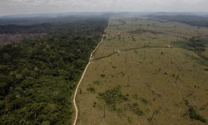 Deforestation Should Be at Heart of Climate Discussion, Says NGO Panel