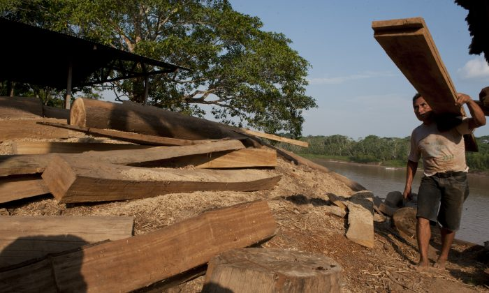 A worker carries cut wood planks close to the city of Puerto Maldonado,  on October 3, 2014. (Cris  Bouroncle/AFP/Getty Images)
