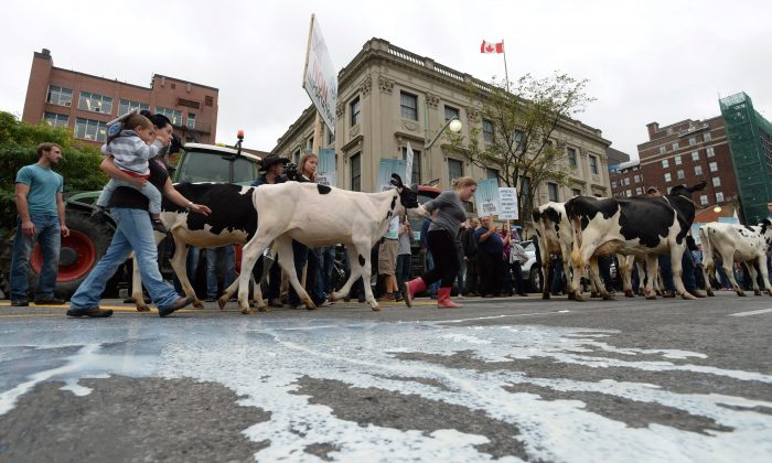 Spilled milk on the street was part of a protest by dairy farmers in downtown Ottawa Sept. 29, 2015. Dozens of dairy farmers from Ontario and Quebec gathered on Parliament Hill to raise concerns about protecting Canada's supply management system in the Trans Pacific Partnership negotiations. (The Canadian Press/Sean Kilpatrick)