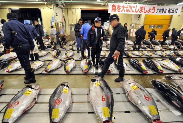 Fishmongers check large bluefin tunas before the first trading of the year at Tokyo's Tsukiji fish market on Jan. 5. A 342 kg bluefin tuna was traded at $400,000 at the wholesale market auction. (YOSHIKAZU TSUNO/AFP/Getty Images)