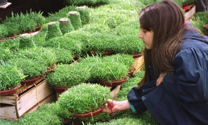 Iranians germinate seeds as a symbol of renewal during Norooz. (Behrouz MehriI/AFP/Getty Images)