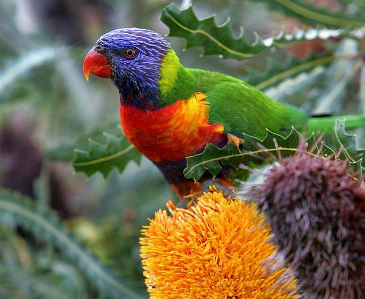Attract native birds to your garden and let them help take care of insect problems. (Greg Wood/AFP/Getty Images)