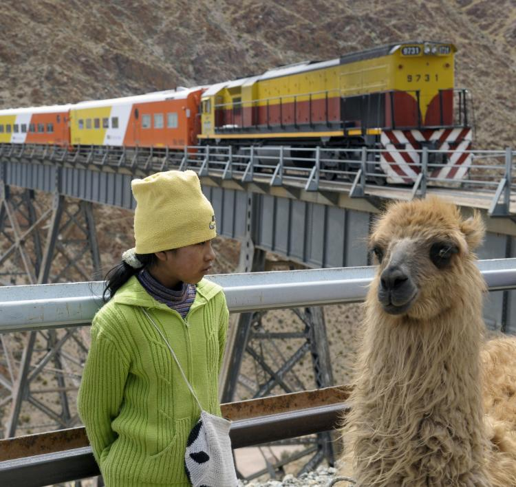 Llamas like this are commmon in Peru and other parts of South America, and often enough play the role of human companions. (Juan Mabromata/AFP/Getty Images)
