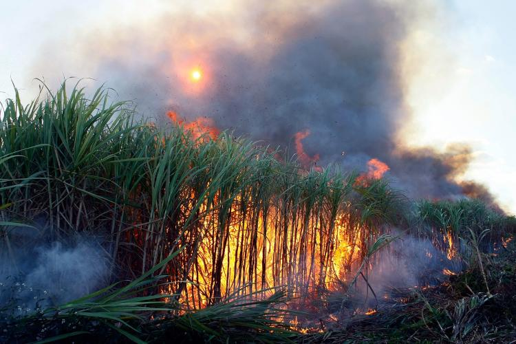 Sugarcane is prepared for harvest by burning off dead leaves and other things in the U.S. Sugar Corporation fields December 18, 2008, in Clewiston, Florida.  (Joe Raedle/Getty Images)