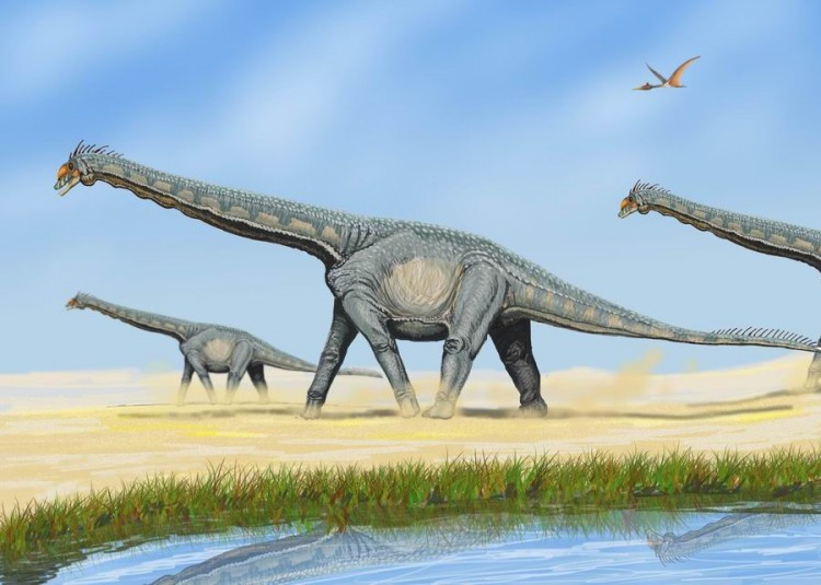 An illustration of Alamosaurus. Study finds that sauropods may have produced more methane than modern sources and contributed to global warming. (DiBgd/Wikimedia Commons)