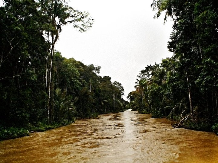 The Carauari River in the Amazon, Brazil (file photo). The Brazilian government has vetoed a provisional measure passed by Congress to alter the new Forest Code, which has less strict environmental requirements compared to the original Forest Code. (Courtesy of Eduardo Rizzo Guimarães)