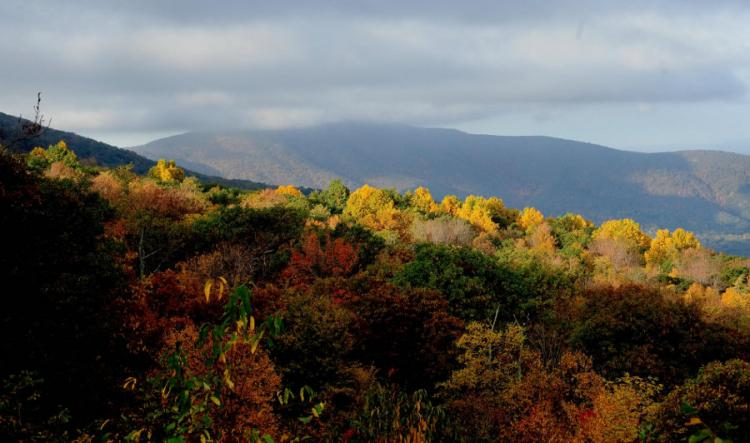 A ridge in the Blue Ridge Mountains is ablaze in Fall colors October 18, 2008 on Skyline Drive in Shenandoah Park, Virginia. The red and gold leaves draw hundreds of people to the scenic drive in the fall. (Karen Bleier/AFP/Getty Images)