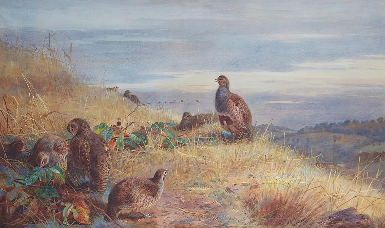 LOVE OF BIRDS: A painting of partridges by Scottish artist and bird conservationist Archibald Thorburn, 'The Covey at Daybreak' is a highlight of the 19th Century Paintings auction on Jan. 27, 2011, London. (Courtesy of Bonhams)
