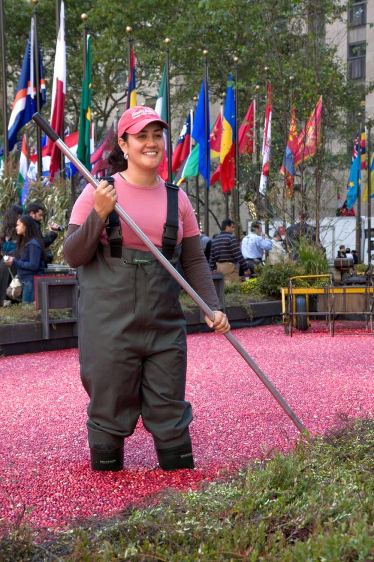 Christina Tassone, fourth-generation cranberry grower, stands in the cranberry bog at Rockefeller Center to celebrate the 80th anniversary of the Ocean Spray grower-owned cooperative.  (Jasper Fakkert/Epoch Times )