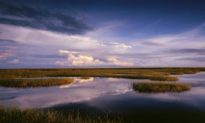Desantis's Florida Agrees to Buy Swath of Everglades to Protect It From Oil Drilling