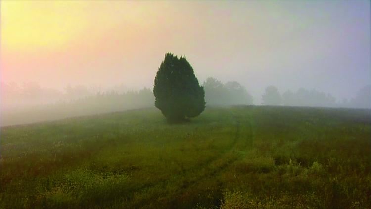 This solitary cedar tree is one of many landscapes surveyed by the narrator early in General Orders No. 9. It is a sequence that reveals a pastoral world that is both surreal and meditative. (Courtesy of Hotdocs.ca)