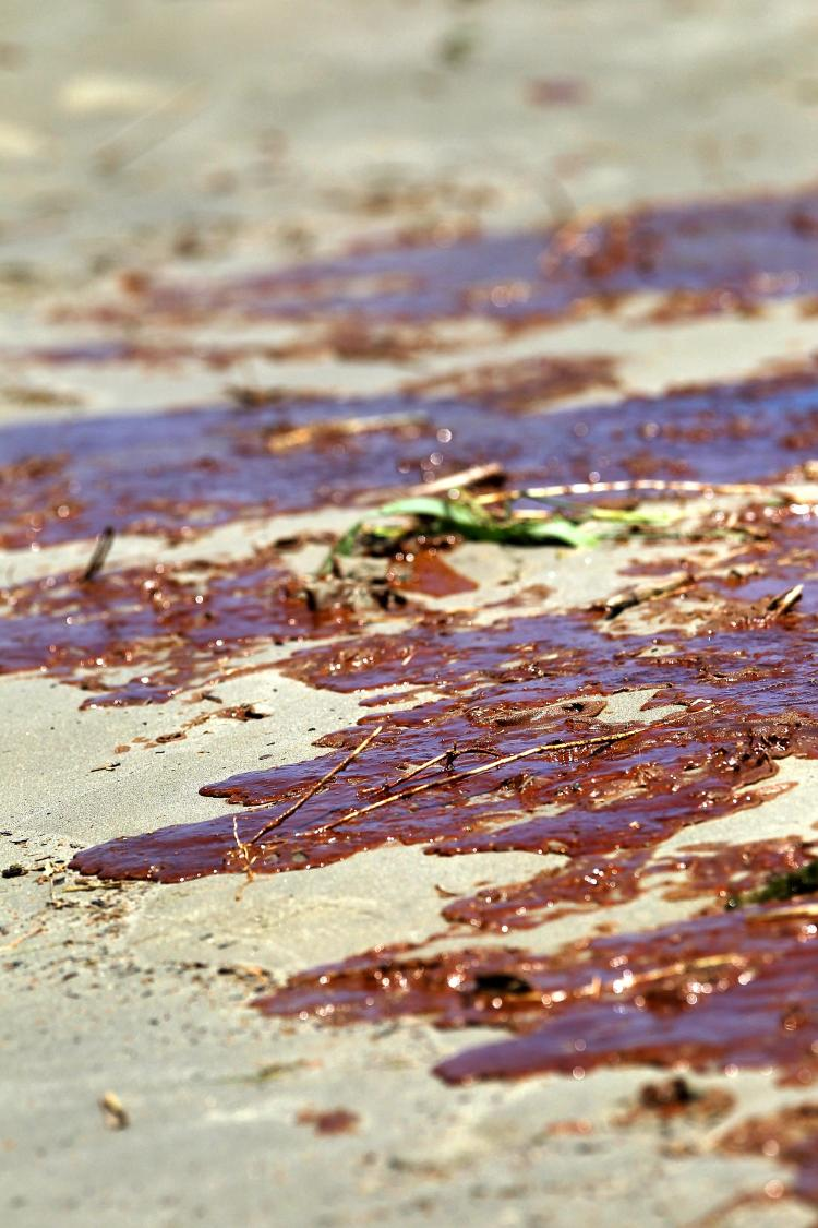 Oil from the gulf oil spill, coats sand at the mouth of the Mississippi River on May 17, south of Venice, Louisiana.  (John Moore/Getty Images)