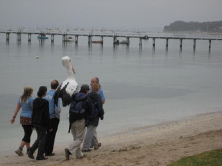 'Friends of The Earth' and pelican mascot embark on their 5 day, 100km walk from Sorrento foreshore  to Port Melbourne, Australia.