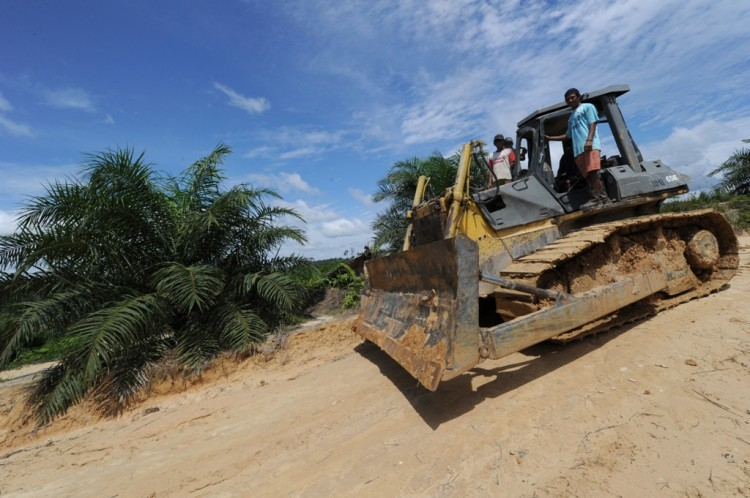 A worker drives a bulldozer near a newly developed palm oil plantation over cleared tropical forest land on June 5, in Borneo, Indonesia. (Romeo Gacad/AFP/GettyImages)