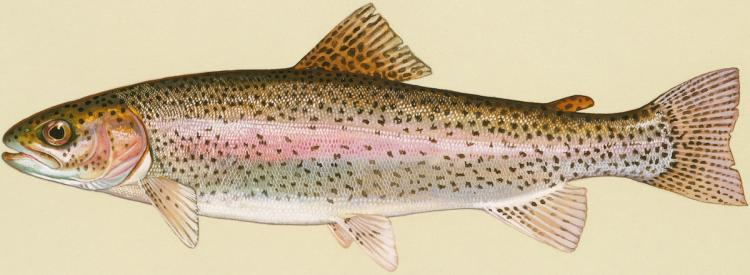 Protecting Salmon: The EPA is gearing up to enforce new label restrictions on three chemicals to prevent their use near salmon habitats in California, Idaho, Oregon, and Washington.  (US Fish and Wildlife Service)
