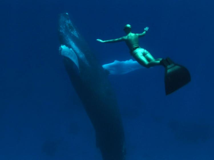 SWIMMING WITH WHALES: A scene from 'The Cove.' (Submarine Films)