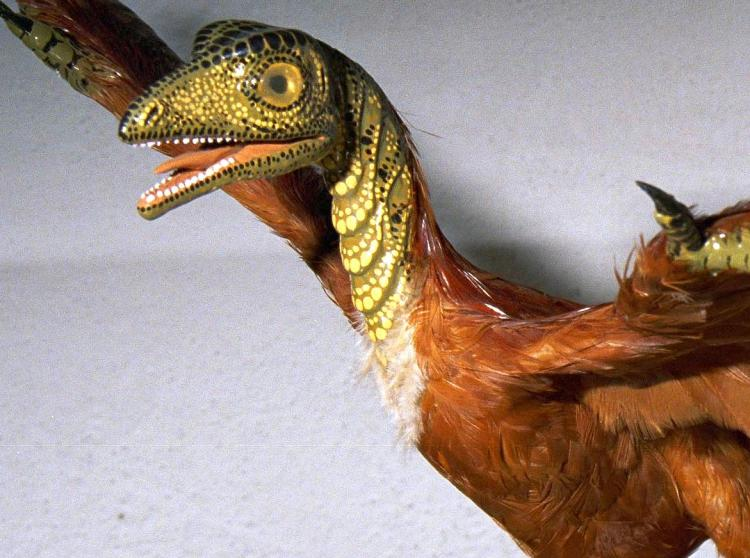 This model of the bird Archaeopteryx has scales on the head, although scientists never found scales in the fossil.  (Courtesy of Carl Werner)