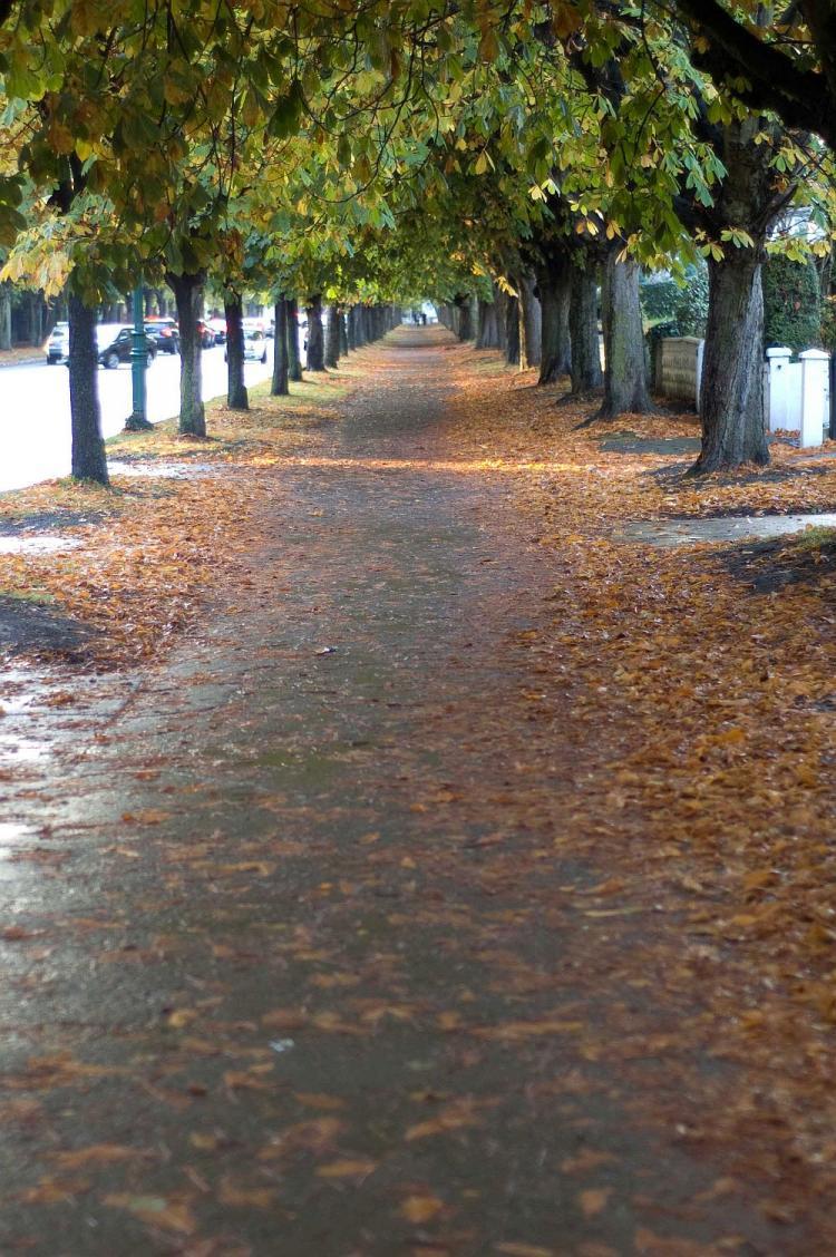 Autumn Scene on Griffith Avenue, Dublin, Ireland. (Martin Murphy/The Epoch Times)