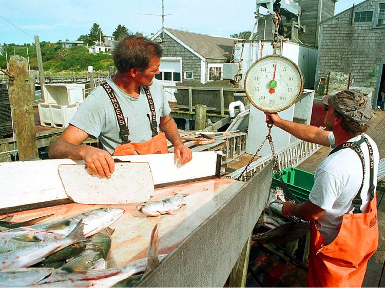 REGULATION: Weirs fishermen weigh up the day's catch in Chatham, Massachusetts in this file photo. Massachusetts fishermen say they're being hurt by federal 'catch shares' limits. (Darren McCollester/Newsmakers)