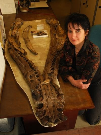 Dr. Judyth Sassoon of the University of Bristol, U.K., with the lower jaw of the Westbury pliosaur.