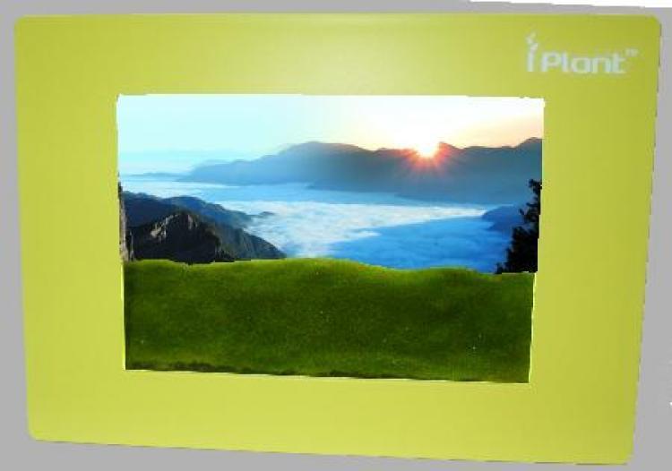 MINI PRAIRIE: A frame with grass.  (Courtesy of Yu Chyu Company)