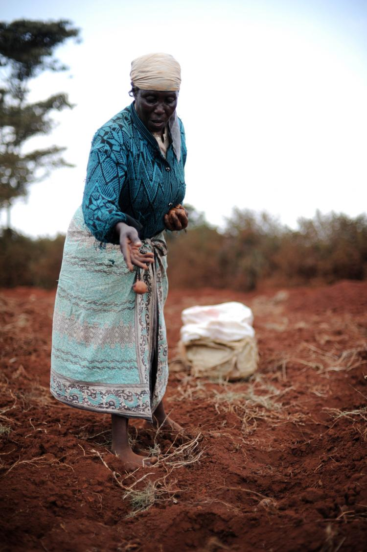 A Kenyan woman throws potato seedlings in a small plot of land. African farmers are among the poorest people in the world, but there are also many success stories that governments and donor organizations can learn from to sew success in the future, accord (Roberto Schmidt/AFP/Getty Images)