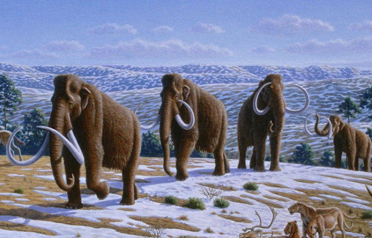 "Mammoths were one of the ""megafauna"" that went extinct during the Pleistocene extinction. According to the first study of mammal range and diversity in ""deep time"", the mammoth family did not show any sign of being predisposed to extinction. (Heinrich Harder)"