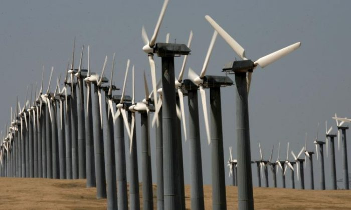 Rows of wind turbines at the Altamont Pass wind farm in Byron, Calif. (Justin Sullivan/Getty Images)