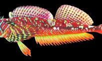 Meet the Unfamiliar Fish of the Salish Sea
