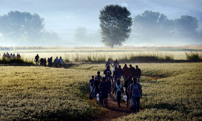 Syrian refugees and migrants walk in a field to cross the border between Greece and Macedonia on Aug. 29, 2015. (Aris Messinis/AFP/Getty Images)