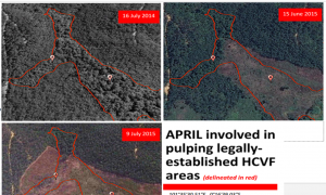 Indonesia's Second Largest Paper Mill Illegally Clearing Forest