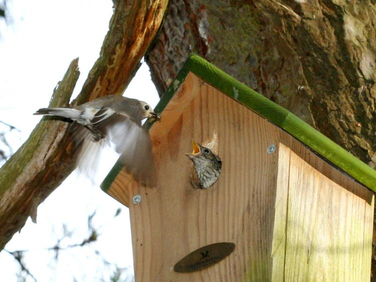 Many birds are already looking for potential breeding places, and others use these boxes to roost.  (Epoch Times)