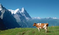 Pure Switzerland—From Interlaken to Jungfraujoch