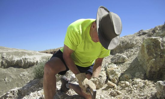 Free App Lets Amateurs Find and ID Fossils