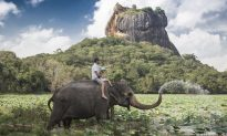 Elephant Loss Could Change Landscape Forever
