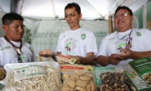 Indigenous From Amazon See Brazil Nut as Forest's Future