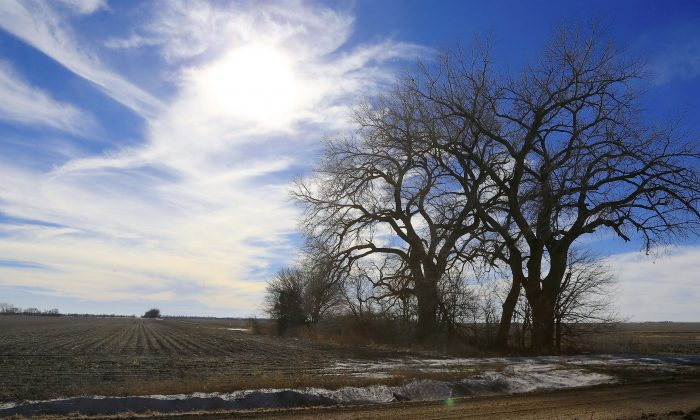 Trees dominate a field through which the Keystone XL pipeline is planned to run, near Bradshaw, Neb., on Jan. 16, 2015. The company behind the controversial Keystone XL pipeline from Canada to the U.S Gulf Coast has asked the U.S. State Department to pause its review of the project. TransCanada said Nov. 2, 2015, a suspension would be appropriate while it works with Nebraska authorities for approval of its preferred route through the state. (AP Photo/Nati Harnik)