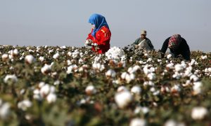 Australia's Cotton On Probes Chinese Supplier Amid Forced Labor Fears