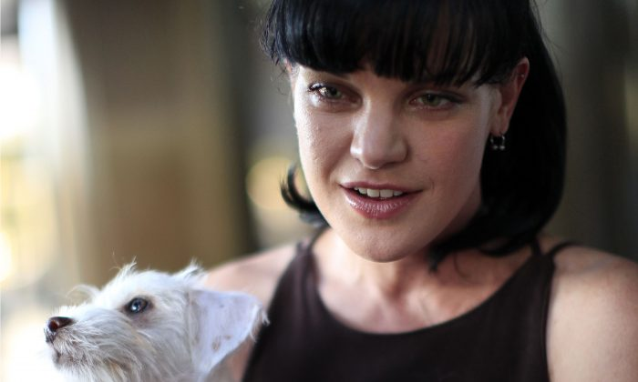 FILE - This July 15, 2010 file photo shows actress Pauley Perrette from the television show NCIS arrives at the Pacific Design Center prior to taking part in a charity dog event benefiting in West Hollywood, Calif.  Authorities say a man attacked  Perrette in front of her Hollywood home, punching her in the face several times. The actress tweeted that she thought she was going to die Thursday night, Nov. 12, 2015. (AP Photo/Richard Vogel,File)