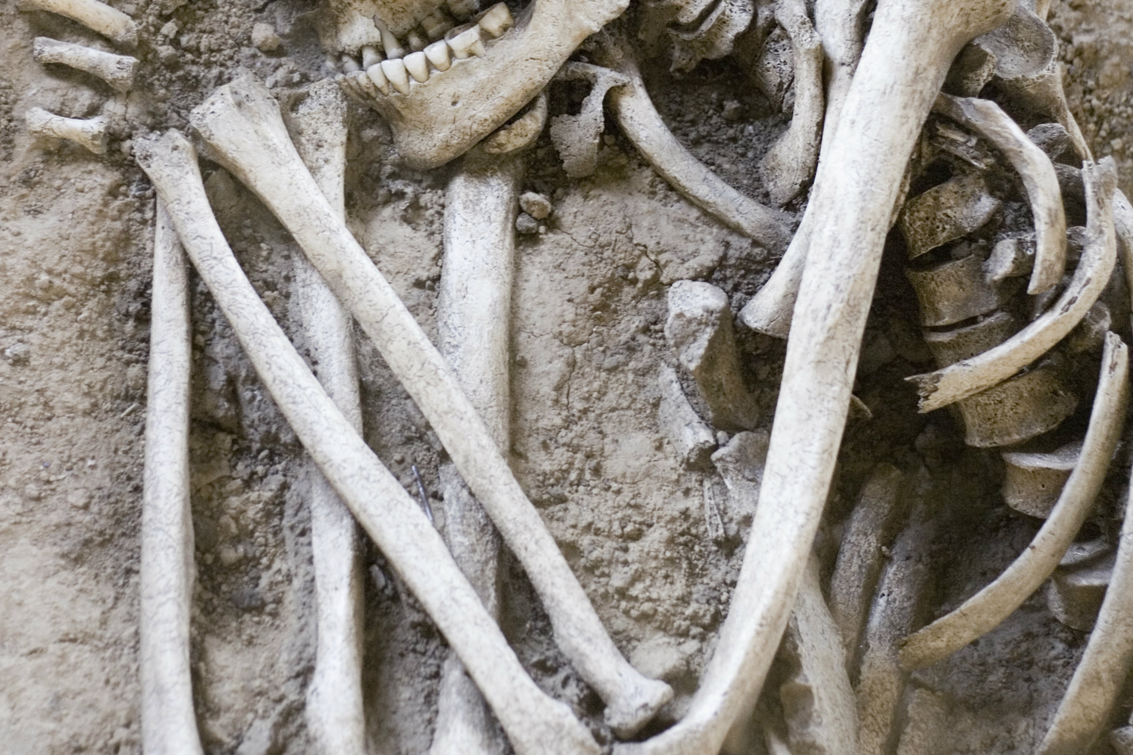 Giant 7-Foot to 8-Foot Skeletons Uncovered in Ecuador Sent for Scientific Testing