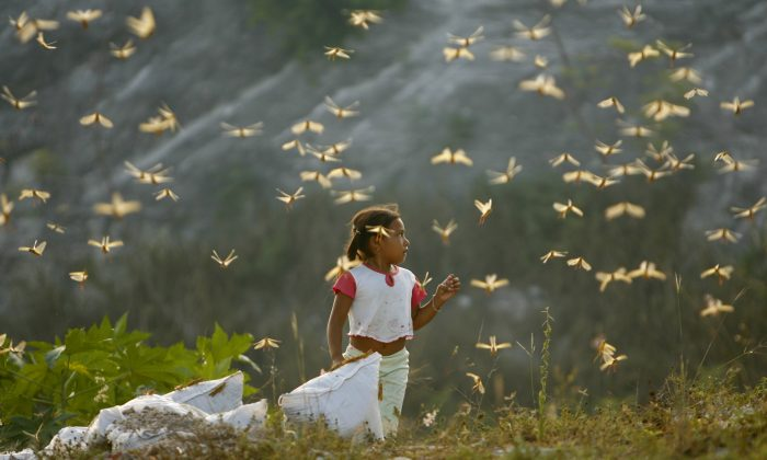 ** FOR USE WITH YEAR END--FILE **Diana Rubi Pech Dzu, 4, walks among a cloud of locusts in the city of Cancun, Mexico, in this  Sept. 25, 2006, file photo. A locust plague invaded the outskirts of this resort city.   (AP Photo/Dario Lopez-Mills/FILE)