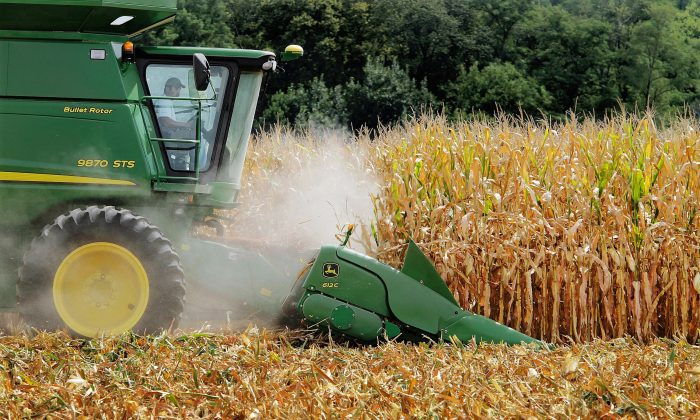 Farmer Jason Podany uses combine to harvest corn near Farmingdale, Ill., on Aug. 30, 2011. The sugar and corn industries ended their billion-dollar bitter battle over sweeteners Friday, Nov. 20, 2015, in a secret out-of-court settlement. Both sides announced the deal that puts an end to a trial that began nearly three weeks ago in Los Angeles federal court pitting sugar against high fructose corn syrup. (AP Photo/Seth Perlman)