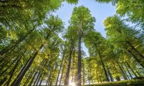 5 Trends That Will Define the World's Forests in 2016