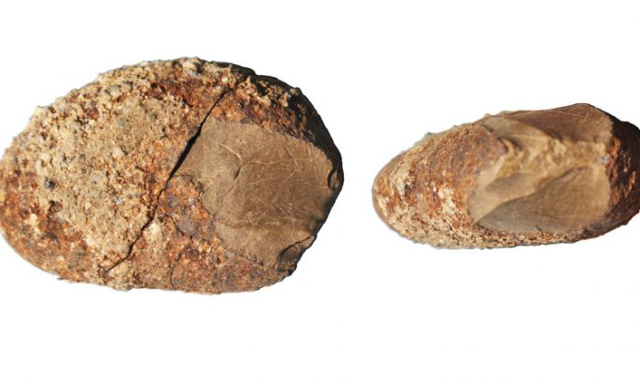 A pebble tool with a bifacially knapped and retouched edge. The stone, called serpentine, is not a local material but likely comes from the coastal cordillera west of Monte Verde. It was found at the older site, MVI, and was made 17,000-19,000 years ago. (Credit: courtesy of Dr. Dillehay/Vanderbilt)