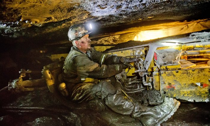 Scott Tiller, a coal miner of 31 years, operates a continuous miner machine in a coal mine roughly 40-inches-high, Tuesday, Oct. 6, 2015, in Welch, W.Va. (AP Photo/David Goldman)
