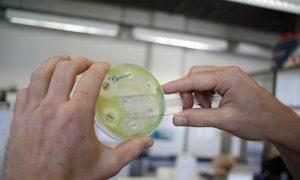 Is the Antibiotic Apocalypse Nigh?