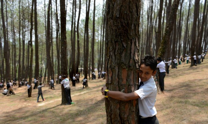 Nepal's well-managed forests are a model for local climate action. Nepalese school children hug trees to celebrate World Environment Day in Gokarna Forest, outside Kathmandu, Nepal, on June 5, 2014. (Prakash Mathema/AFP/Getty Images)
